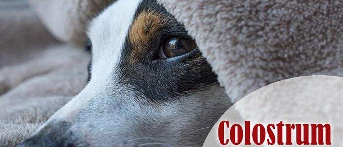 Colostrum für Hunde